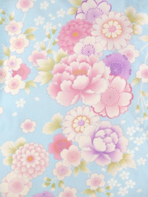 画像3: <訳ありセール>卒業式に 小学生の女の子 総柄の着物(ジュニア用振袖) 150cm【水色 牡丹と菊に桜】 ※襦袢付き
